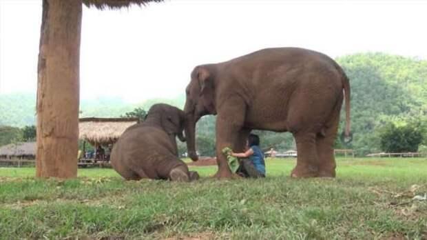 Колыбельная для слонихи