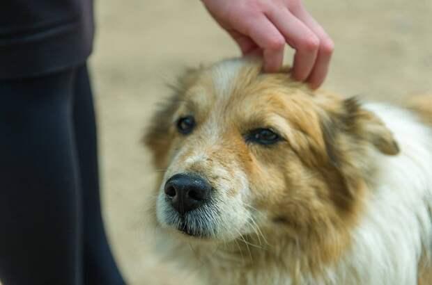По контракту: «Желтая бирка» займется отловом бездомных кошек и собак в Ижевске