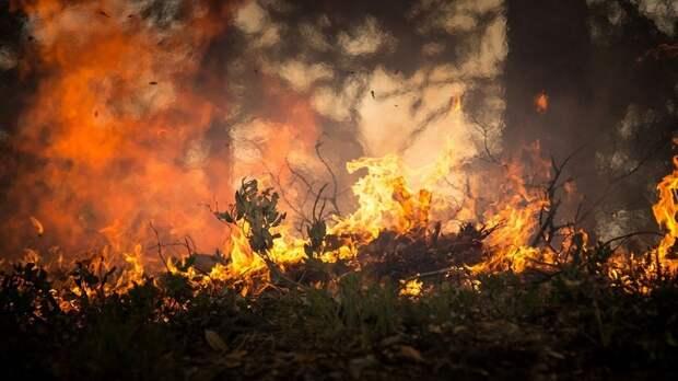 Эксперт рассказал о причинах лесных пожаров в регионах России