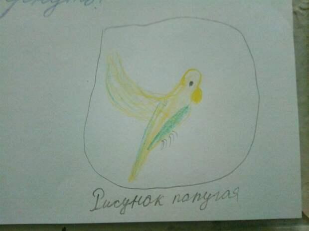 Волнистый попугайчик из дома на Таможенном «объявлен в розыск»