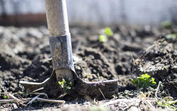 Севастополец убил жену и закопал ее во дворе