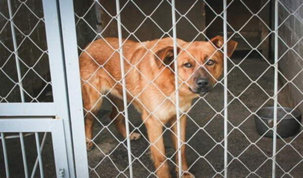 Мэр Бугульмы призвал неравнодушных помочь достроить приют для бездомных животных