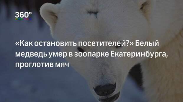 «Как остановить посетителей?» Белый медведь умер в зоопарке Екатеринбурга, проглотив мяч