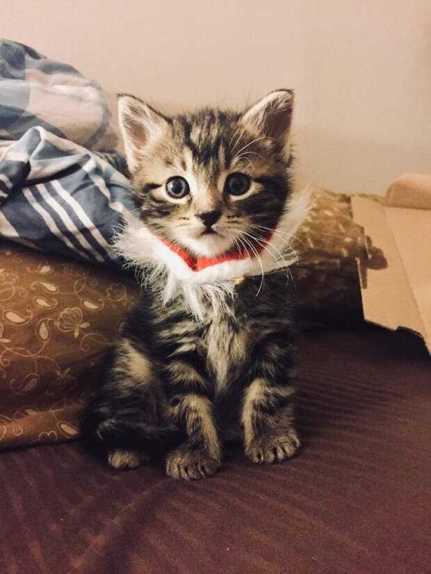 Они впустили в дом маленького котенка, а он нагло похитил их сердца!