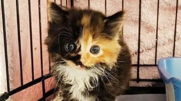 Девушка планировала взять в дом котенка, но не ожидала, что у малышки уже есть подруга, которую она любит всей душой