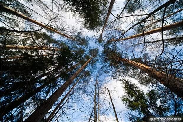 Кроны деревьев поздней осенью в ноябре