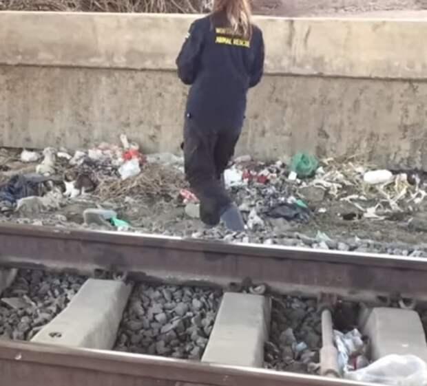 Кто-то оставил щенка возле железнодорожных путей. Крошечная собачка искала себе еду