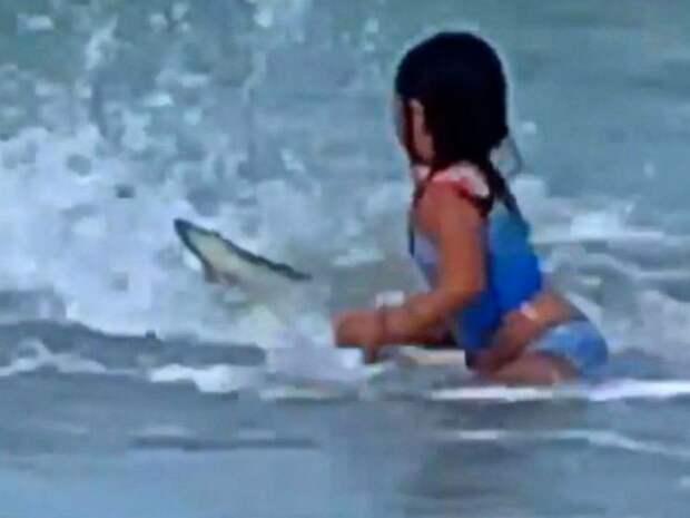 Акула напугала ребенка своим появлением, но не причинила ему вреда
