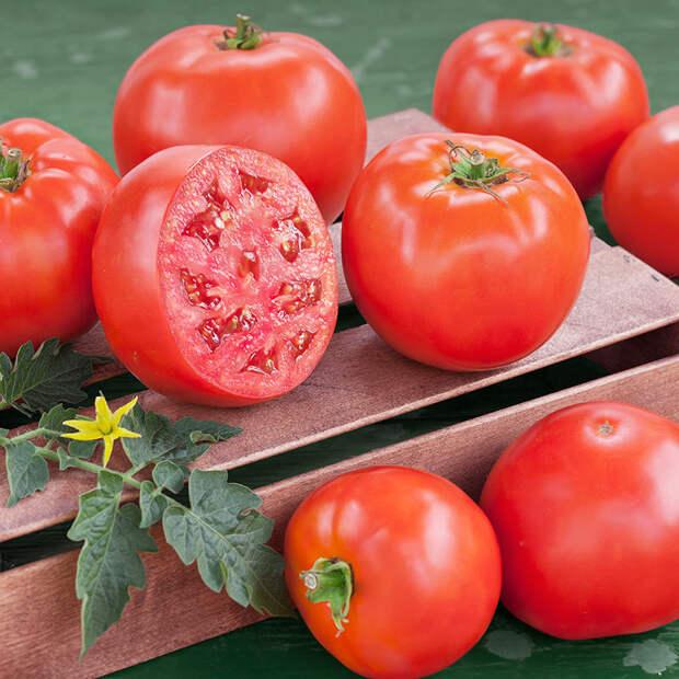 Выращивание ранних томатов в ведрах