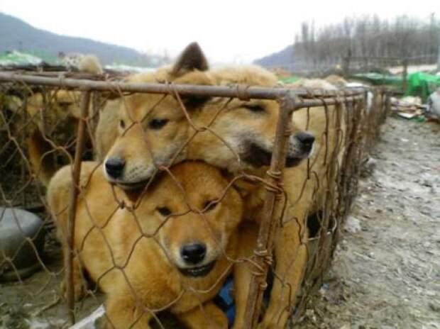 Суд в Самаре позволил разводить собак на убой