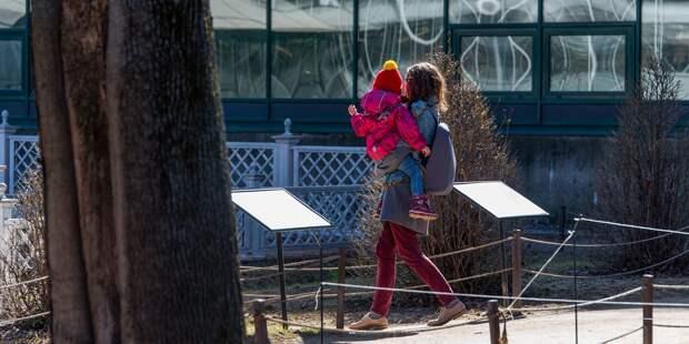 Новые правила назначения детских пособий утвердили в России