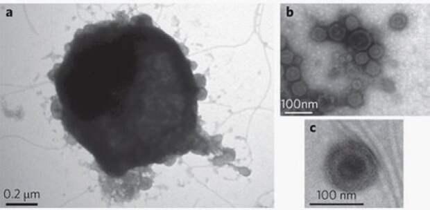 В Антарктиде нашли неуязвимые микроорганизмы