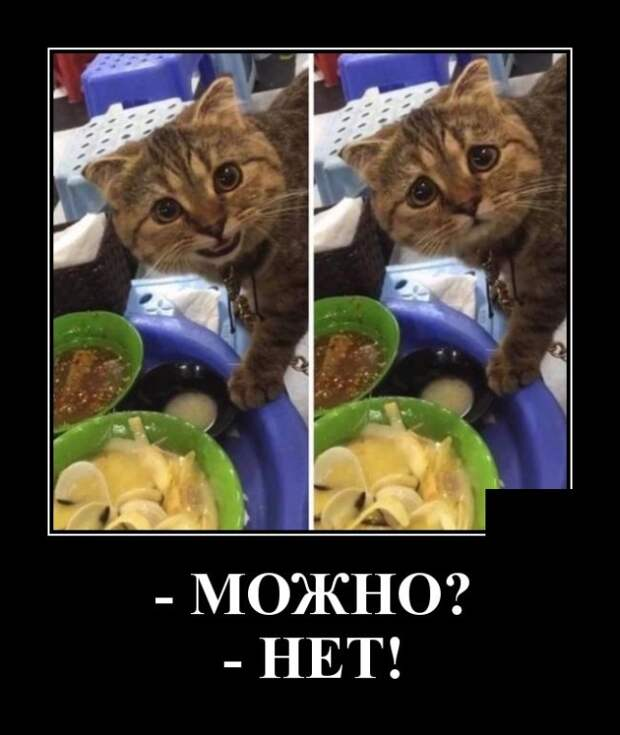 У вас в холодильнике мышь повесилась..