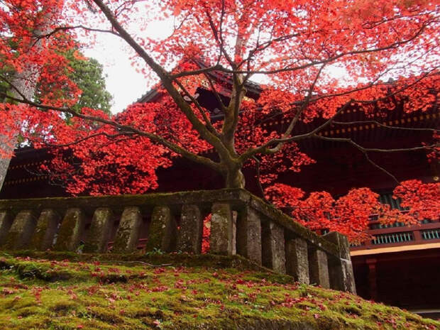 autumn_in_shinto_shrine_red_japanese_tree_1600x1200_hd-wallpaper-1889784 (800x625, 521Kb)