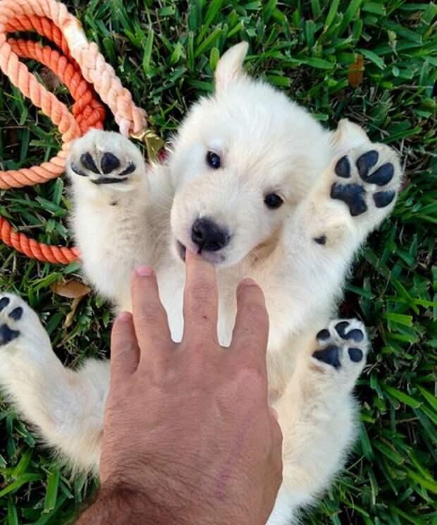 Забавные щенята, которые сразят вас своим очарованием. Часть II (25 фото)