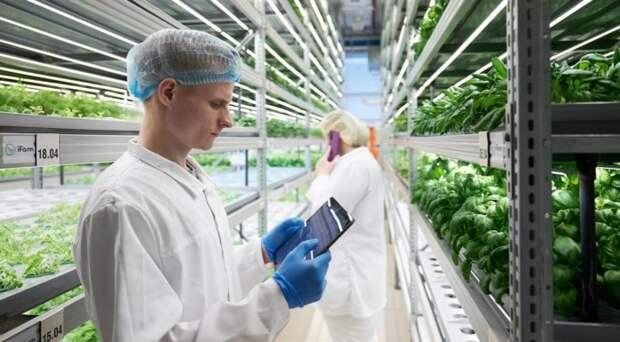 Новосибирская компания построит ферму в Норвегии