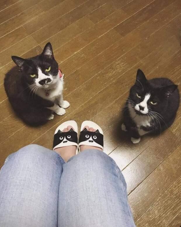 Тапки с котами