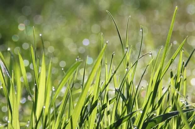 Эколог проведёт бесплатную экоэкскурсию по парку Яуза в Свиблове