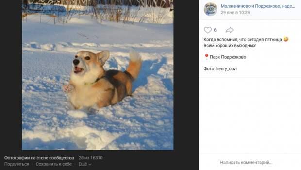 Фото дня: у корги в парке «Подрезково» замерзли лапы