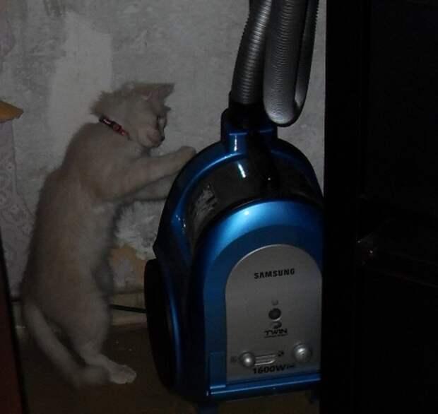 Хамура Кусаки – 2 кот и пес, котенок, питомцы