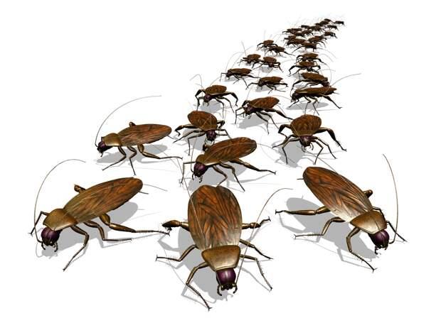 Роспотребнадзор предупреждает россиян о февральском нашествии тараканов