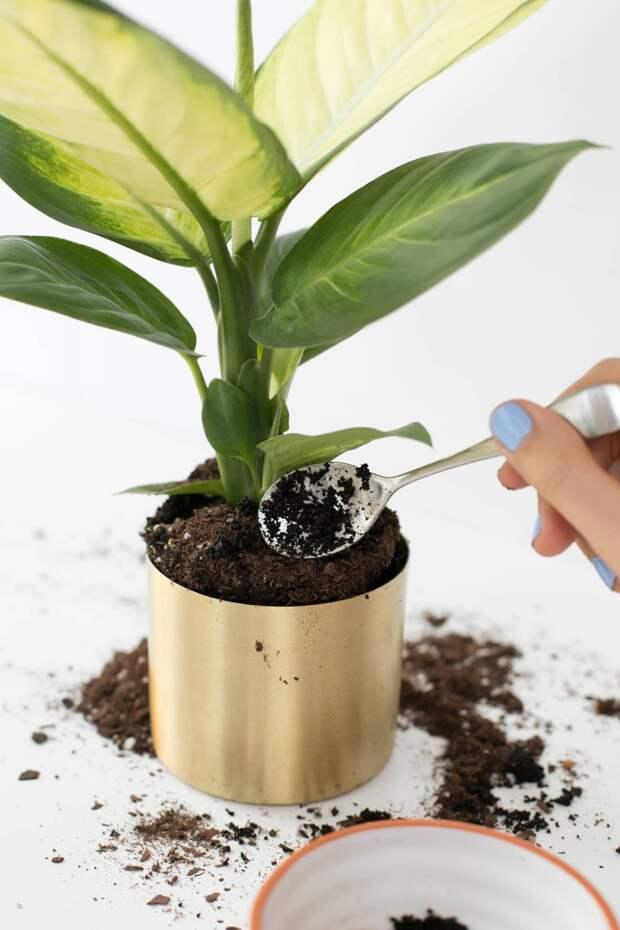 Ваши растения хотят, чтобы вы дали им немного кофе, и вот почему