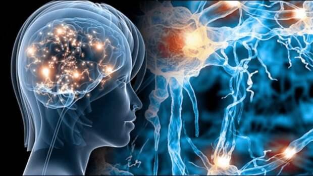 Одиннадцать измерений человеческого мозга: что обнаружили учёные