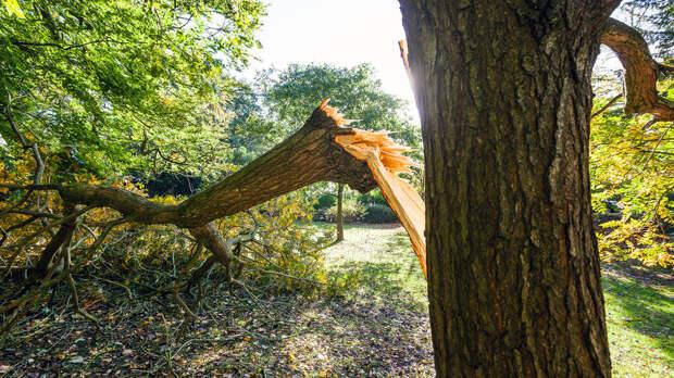Подростка убило упавшее на него во время непогоды дерево