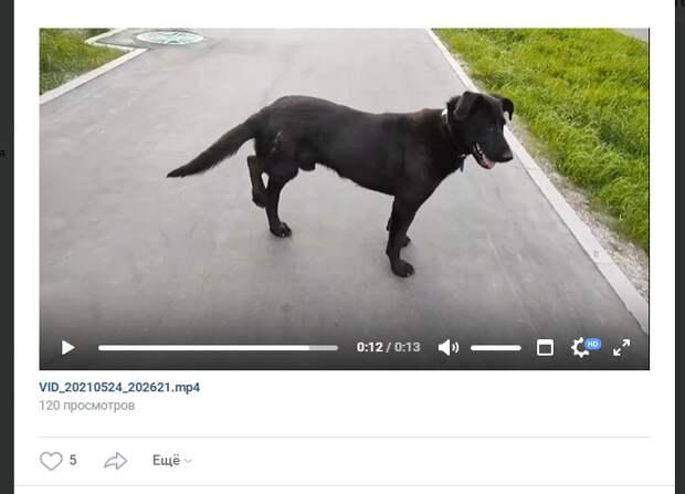 Хромающий пес поселился на стройке в Некрасовке