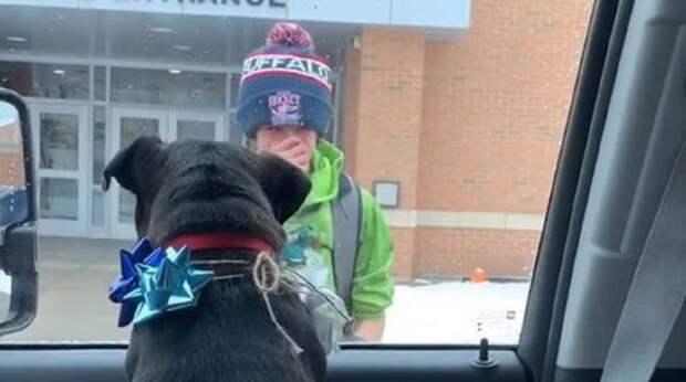 Выйдя из школы, мальчик подошел к автомобилю и разрыдался. Только что он увидел собаку, которую потерял