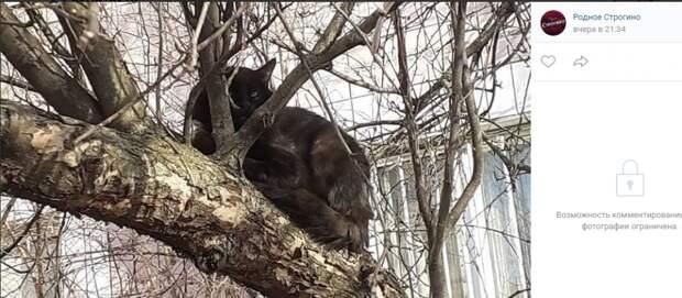 Фото дня: перелетные коты в Строгине