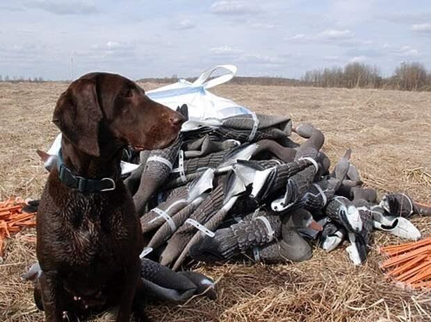 Охота на гусей: личный опыт