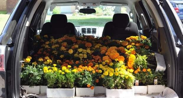 Подготовка к дачному сезону — как перевозить вещи и рассаду в автомобиле