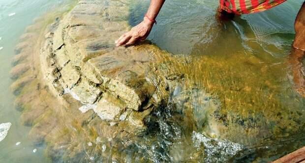 Затонувший храм поднялся на поверхность реки Маханади в Индии