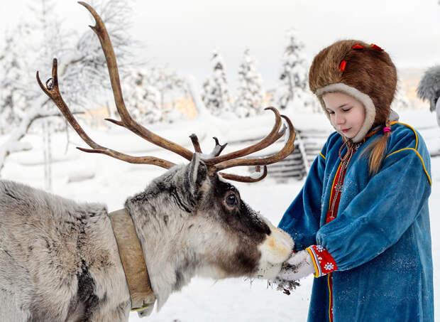 Как живет исчезающий народ русской Лапландии саамы