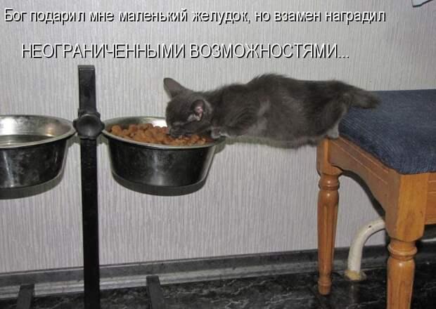 1450431421_kotomatrica-27