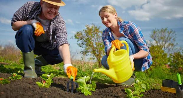 Подготовка огорода к весенним посадкам: как сделать грядки