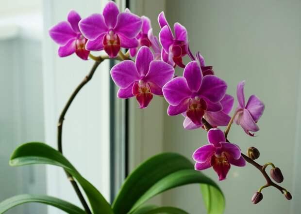 Крутые цветочные суеверия со всего мира. Цветок – вампир, который высасывает здоровье и удачу