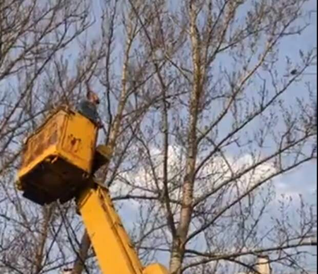 Женщина спасла от ворон попугая в Гончаровском парке и вернула его хозяину