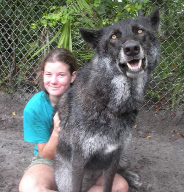 волк и девушка