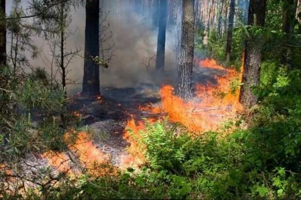 Спасатели рассказали о пожарной безопасности в лесу