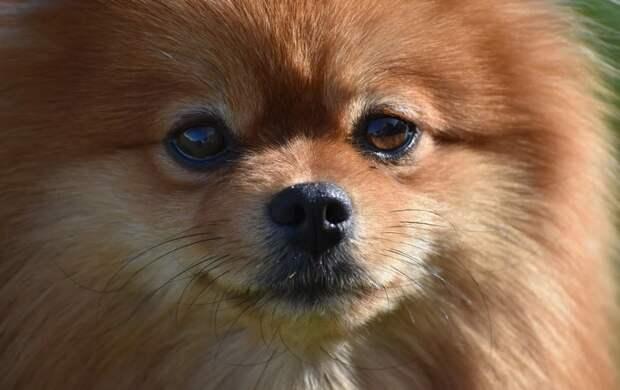 Без права выгула: в Иркутске вернувшегося из Таиланда мужчину отправили на карантин вместе с собакой