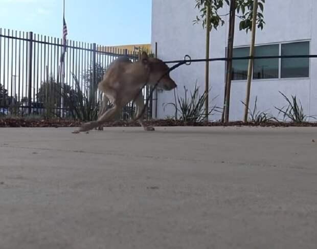 Пес убегает