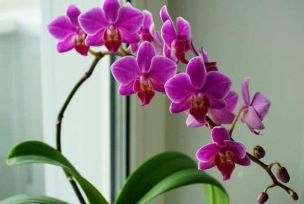 Что ты такое? Самые некрасивые цветы в мире