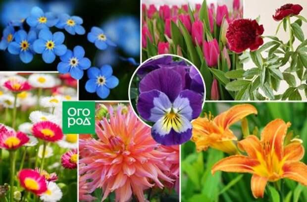 Цветник с обложки: романтичный уголок с розой и ромашками для маленького сада