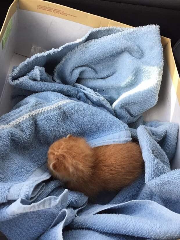 Его нашли на дне мусорного бака, он едва умещался в ладони...