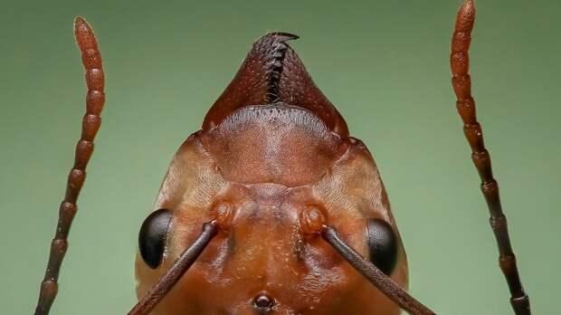 Биологи обнаружили у муравьев подобие сватовства