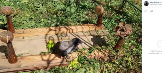 В Марьине птенцы дроздов-рябинников начали покидать гнезда