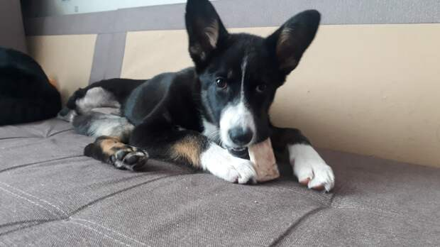щенок на диване