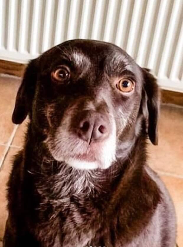 Собака с большими глазами